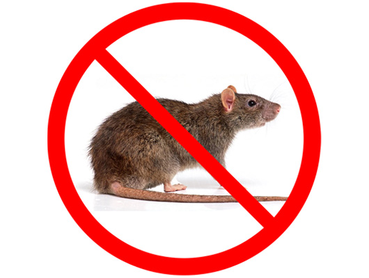 Rodent Proofing and Rodent Control